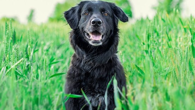 Evaluating Pet Containment Options for Dogs